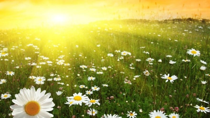 Сегодня на Ямал «пришло лето»! Однако ложка дегтя испортит весь мед