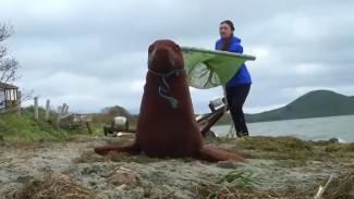 Тюлений тренинг: сахалинские добровольцы готовятся спасать морских млекопитающих