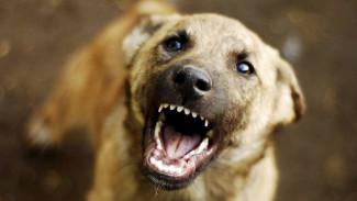 Главный ветеринар Ямала - о вспышках бешенства в округе и о том, какие меры предпринимаются для их ликвидации