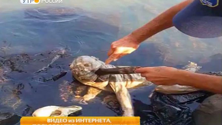 В Парагвае выловили чупакабру. «Козий вампир» ошарашил ученых и местных жителей