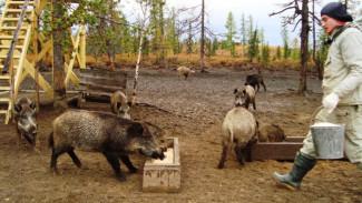 Верхне-Полуйский заказник: свинюшки-кабанюшки, овечки и прочая милота в фотоподборке Евгении Любимской