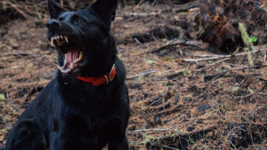 В ЯНАО возбудили уголовное дело после нападения на ребенка бродячей собаки