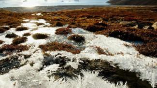 Эксперт - о том, какую пользу человеку могут принести бактерии, обнаруженные в вечной мерзлоте Тазовской тундры