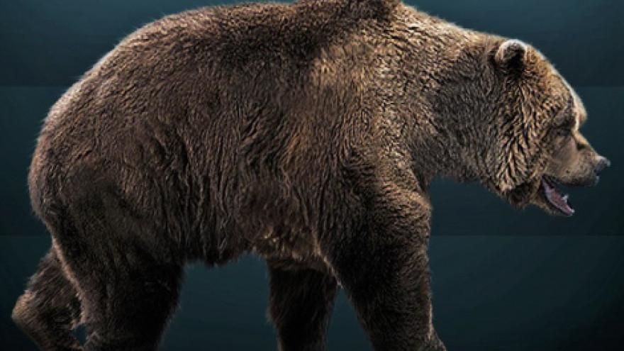 В российской Арктике впервые нашли мумию медведя возрастом около 40 тысяч лет