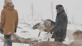 Денег нет, людей тоже: оленеводов Якутии становится все меньше