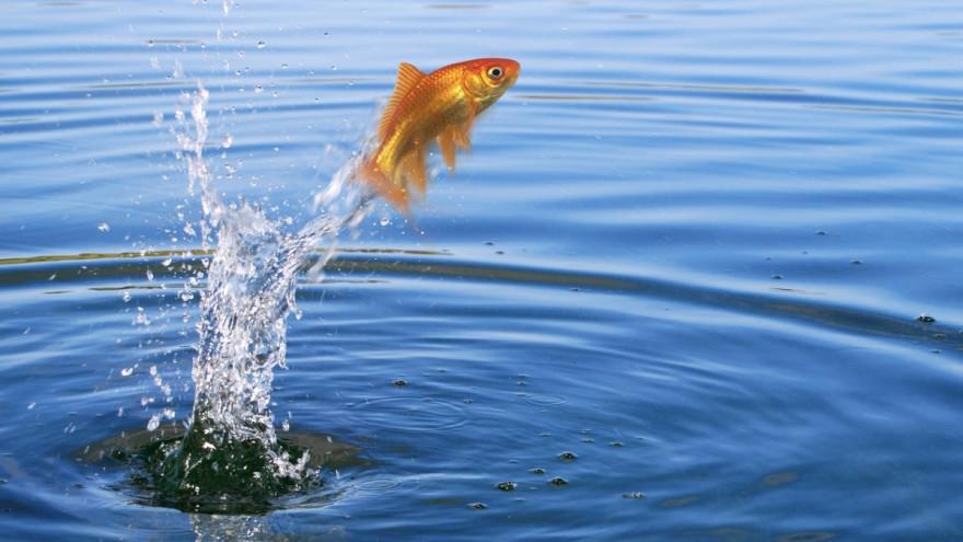 Приметы на 8 июня: лучший день, чтобы поймать золотую рыбку