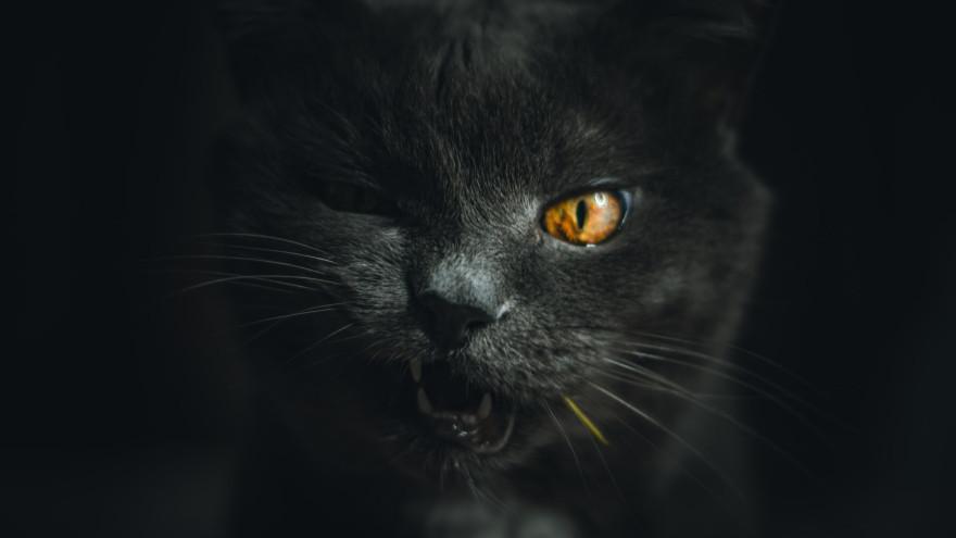 23 августа: какой сегодня праздник, приметы о чёрной кошке и счастье
