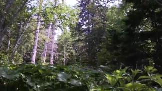 Тайгу на Дальнем Востоке заполонили жуки-короеды: как ученые планируют спасать деревья
