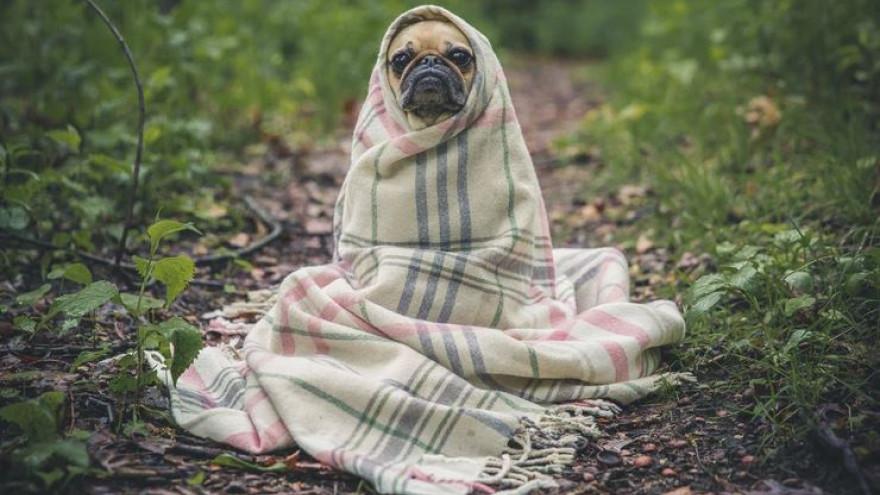 Погода в Салехарде: прохладно, но без осадков