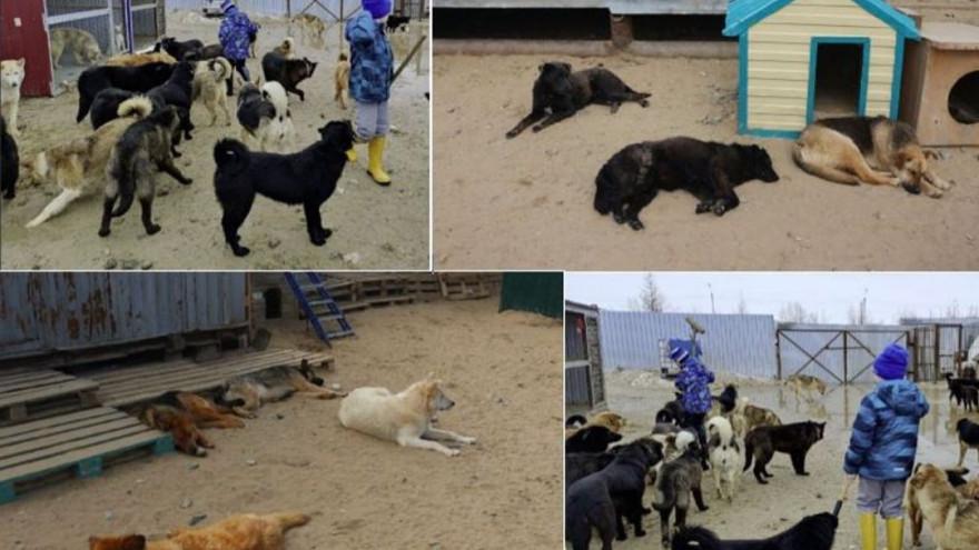 В Новом Уренгое кота бросили на растерзание стае собак