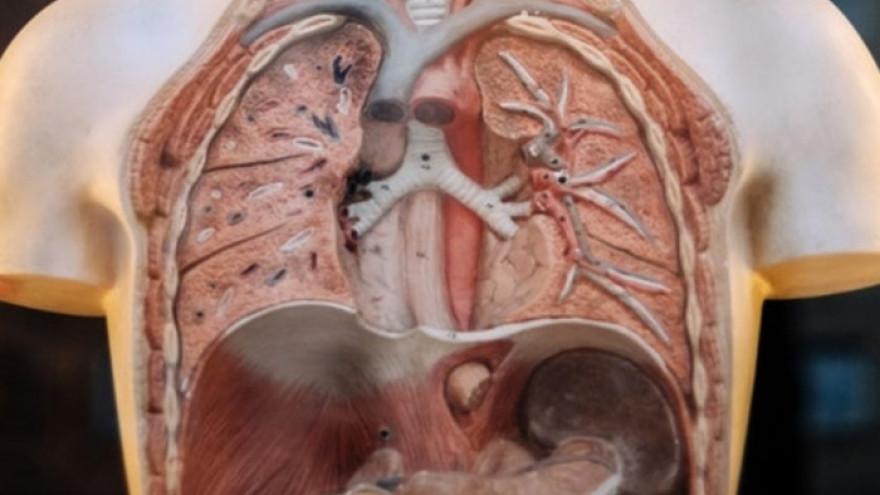 Ученые назвали продукты, которые помогают восстановить легкие курильщиков