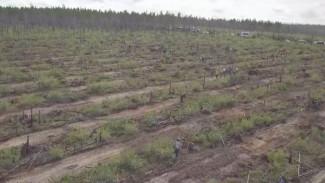 «Сохраним лес»: жители Якутии принялись восстанавливать природу