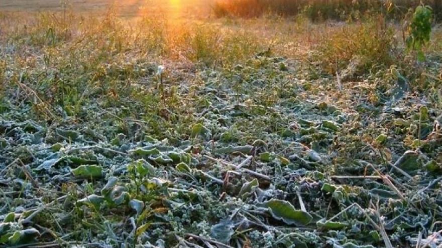 Погода в Салехарде: хмурое небо и первые заморозки