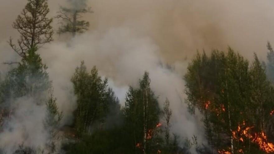 На Ямале огонь охватил 16 гектаров леса: пожар удалось локализовать