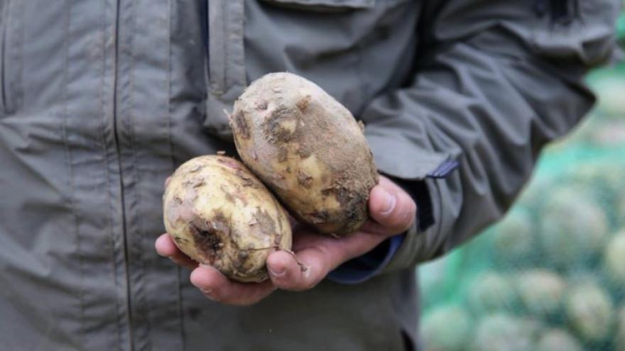 Ученые будут выращивать на Ямале «супер-супер элитный» картофель