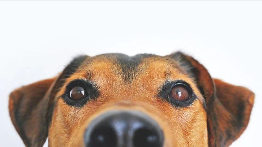 Лабытнангские депутаты предложили штрафовать людей за выпуск собак на самовыгул