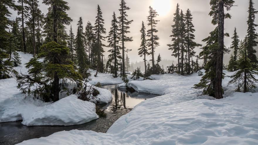 Погода на Ямале: синоптики прогнозируют осадки