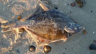 Морской урожай: на магаданской земле стартовала путина