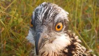 Изучить хищных птиц на Колыме приехали ученые: что и кто волнует людей науки