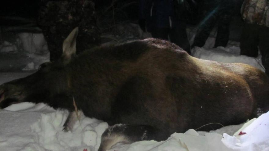 На Ямале за убийство семи лосей на охотников завели уголовное дело