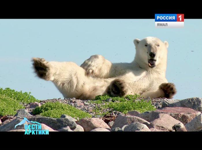 На Чукотке пройдет заседание российско-американской комиссии по белому медведю
