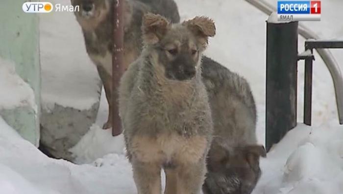 На Ямале ловцы собак просто душили их, чтобы снизить расходы