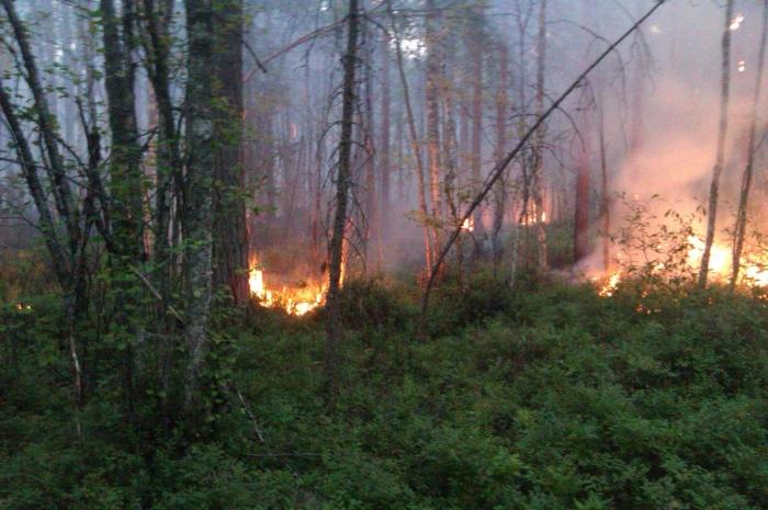 На Ямале растёт площадь природных пожаров