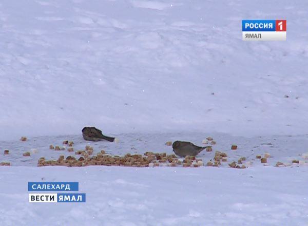 Птицы на Севере