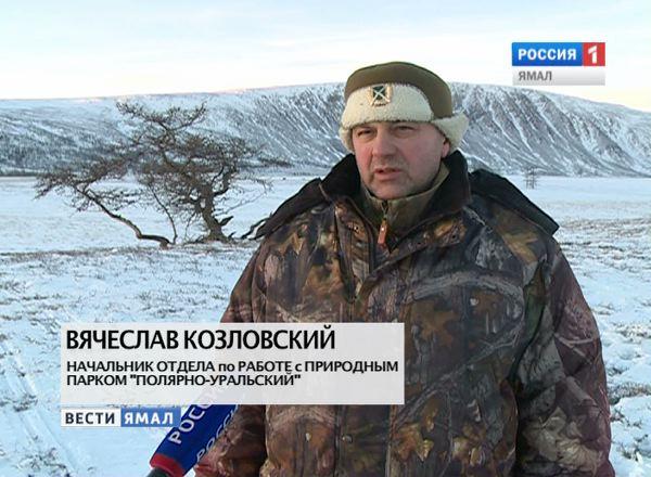 Вячеслав Козловский, начальник отдела по работе с природным парком «Полярно-Уральский»
