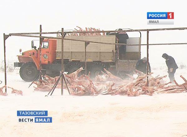 Заготовка оленины в Тазовском районе