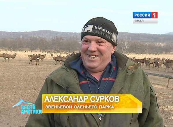 Александр Сурков, звеньевой оленьего парка