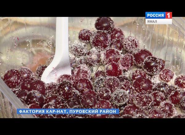 Ученые отыскали причину ожирения у туземцев Ямала