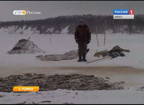 Горковские рыбаки первыми на Ямале начнут летнюю путину