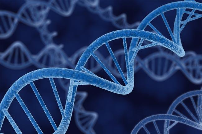Ученые впервые отредактировали геном в организме живого человека, страдающего неизлечимой болезнью