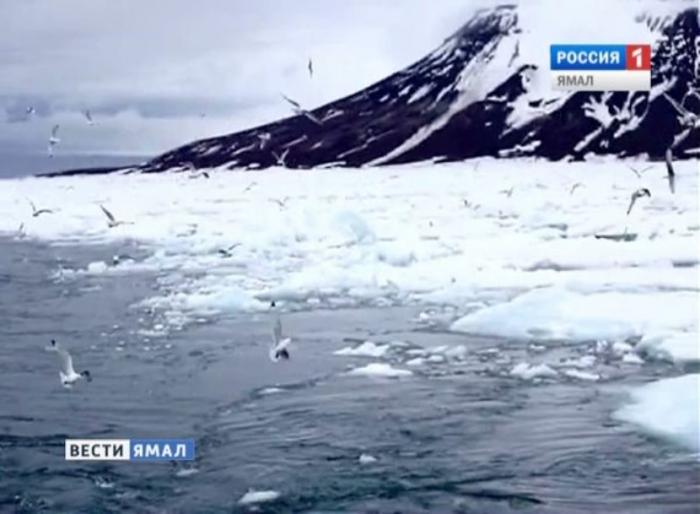 Землетрясение магнитудой 6,0 было зафиксировано в Арктике сейсмологами