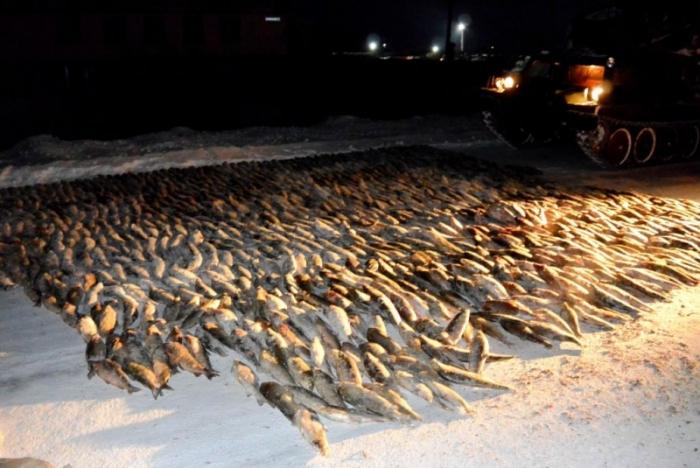 В Лабытнанги полиция изъяла крупную партию муксуна (Фото)