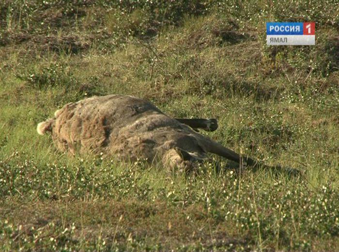 Патрушев заявил о риске вскрытия опасных могильников с сибирской язвой