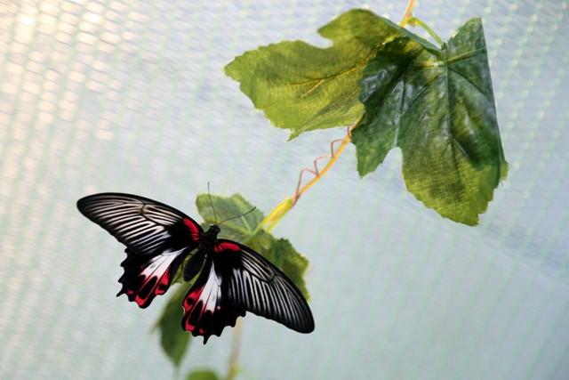 Бабочки в саду сценарий