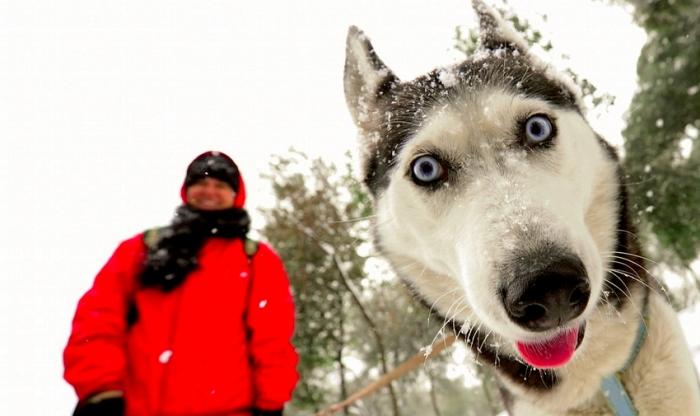 Новоуренгойцы предлагают ввести сборы с владельцев собак для уборки территорий