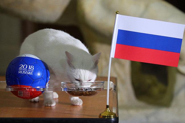Кот-оракул Ахилл предсказал итоги матча Россия – Египет