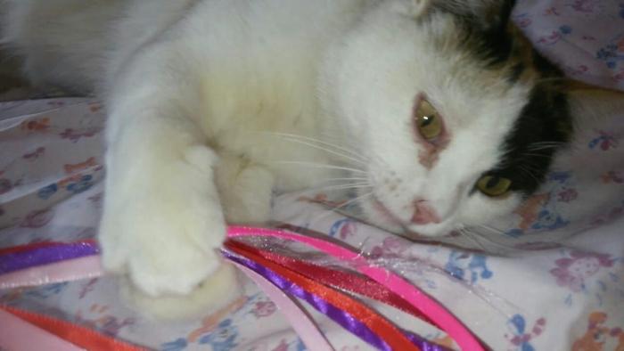 В Муравленко неизвестные засунули кошку в коробку, обмотали скотчем и выкинули на помойку
