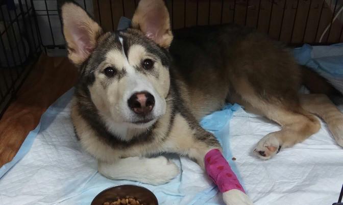 В Новом Уренгое живодер выбросил собаку из окна 8 этажа