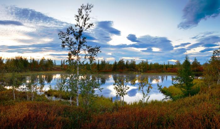 Ученые проанализировали ямальские озера на чистоту