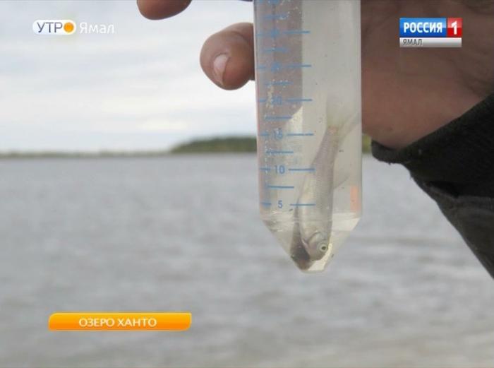 Отстойники и шлюзы могут стать спасением для озера Ханто