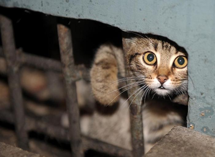 Минстрой обязал оставлять в подвалах новостроек проходы для кошек