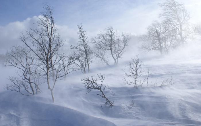 ЦГМС: завтра в отдельных районах Ямала возможна метель