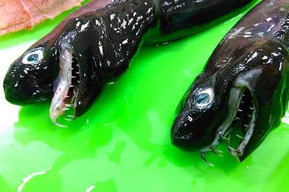 Ученые поймали в Тихом океане «Чужого»