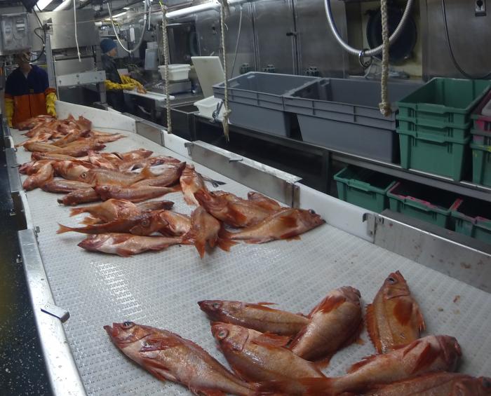 На Ямале откроют мини-цех по переработке рыбы