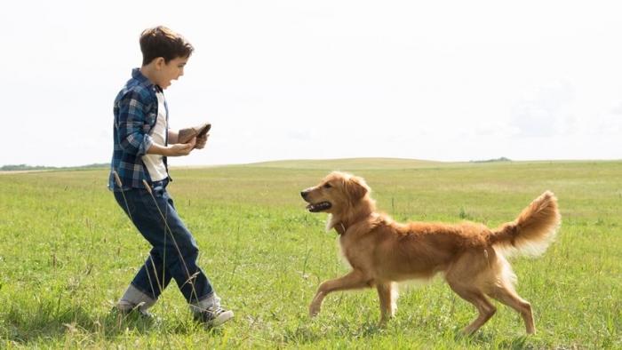 Встретьте год собаки просмотром фильмов о четвероногих друзьях!