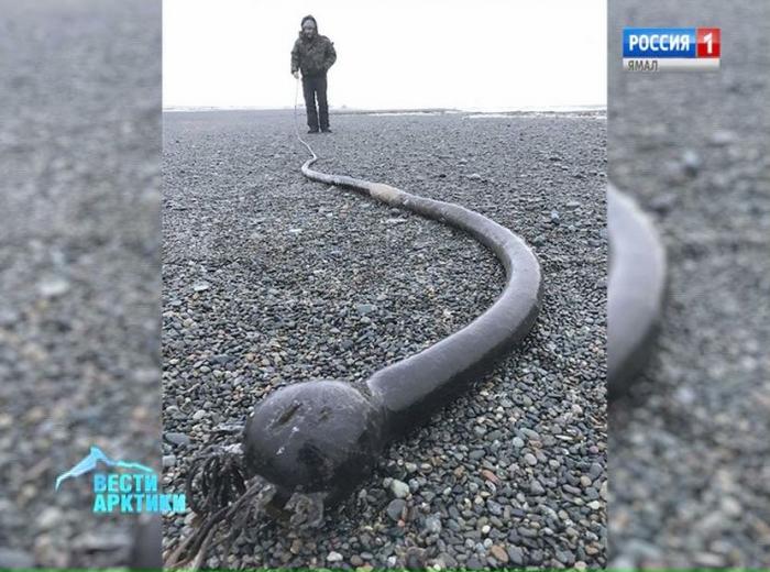 Жителей Чукотки напугали гигантские «морские змеи»